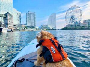 【横浜支部が国産ドッグフードレオ&レアさんのブログで紹介されました!】